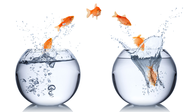 change fish.jpg